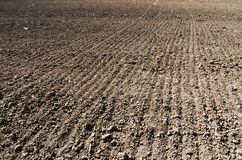 Black plowed field. In spring Royalty Free Stock Photo