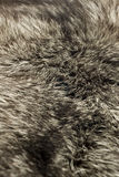 Black Polar Fox fur Royalty Free Stock Photography