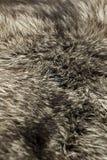 Black Polar Fox Fur Royalty Free Stock Photography