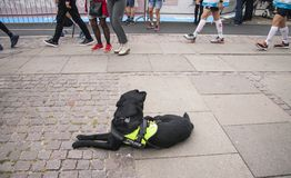 Black police dog lying on the ground relaxing. The dog has a harness saying Police - Explosives Search Dog. People passing by in t. He background. Stock image stock images