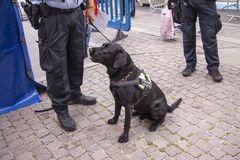 Black police dog sitting by the feet of a police officer holding a leash. The dog has a harness saying Police - Explosives Search. Dog. Stock image royalty free stock image
