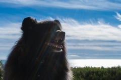 Black pomeranian spitz outdoors. Black pomeranian spitz sits outdoors royalty free stock images