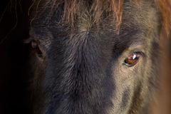 Black pony eyes Stock Photo