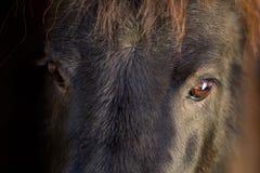 Black pony eyes. Black Shetland pony eyes on dark background Stock Photo