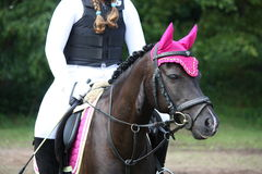 Black pony portrait during horse competition Royalty Free Stock Photography