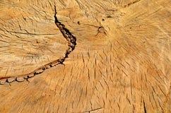 Black poplar tree wood cut texture Royalty Free Stock Image