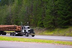 Black powerful big rig semi truck transporting long logs on the Royalty Free Stock Photography