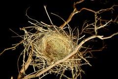 black ptaków tła puste gniazdo Zdjęcie Stock