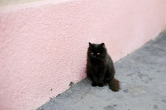 Black Puffy Cat Royalty Free Stock Images