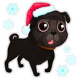 Black pug in christmas hat. Illustration of dog pug breed. Vector portrait of black pug dog. Pug of cartoon style Vector Illustration
