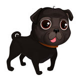 Black pug. Illustration of dog pug breed. Vector Illustrative Portrait of Pug Dog. Pug of cartoon style Royalty Free Illustration