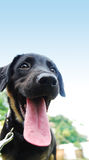 A black puppy. Sitting on the garden Royalty Free Stock Photo