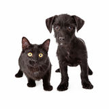 Black puppy and kitten Stock Photo