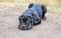 Black puppy in nature royalty free stock photos
