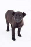 Black puppy on road Royalty Free Stock Photo