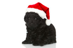 Black puppy with santas hat Stock Image