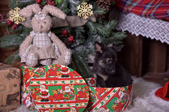 Black puppy and toy bunny. And Christmas tree Royalty Free Stock Image