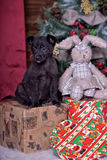 Black puppy and toy bunny Stock Photos