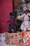 Black puppy and toy bunny. And Christmas tree Royalty Free Stock Photography