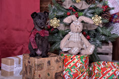 Black puppy and toy bunny Stock Image