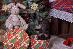Black puppy and toy bunny. And Christmas tree Royalty Free Stock Photos