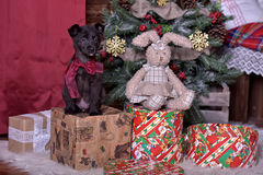 Black puppy and toy bunny. And Christmas tree Royalty Free Stock Photo