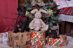 Black puppy and toy bunny. And Christmas tree Royalty Free Stock Images