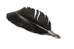 Black quill pen Stock Photography