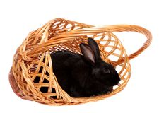 Black rabbit in a basket. Stock Photography