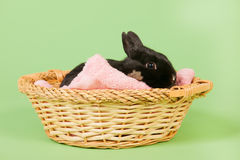 Black rabbit in basket Stock Photography