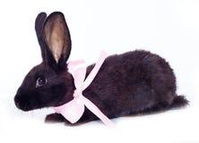 Black rabbit bow Royalty Free Stock Photography
