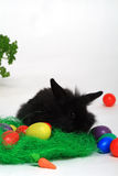 Black rabbit and Easter eggs. A black bunny rabbit near imitation grass and colored Easter eggs.  White background Stock Photo