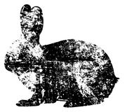 Black rabbit grunge template. Hare silhouette pattern. Black object on white background isolated. Drawing on old rough wall. Stock Image