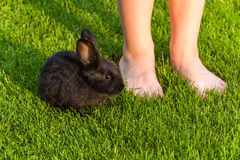 Black Rabbit Royalty Free Stock Images