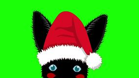 Black Rabbit with Santa Hat Sneaking. Greeting Card Christmas Day. stock footage