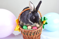 Black rabbit sitting on Easter basket decoration balloons Royalty Free Stock Photo