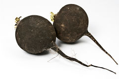Black radish Royalty Free Stock Photography