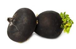 Black radish. On a white background Stock Image