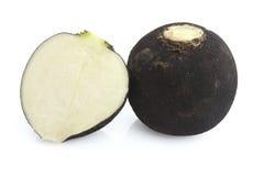Black radish. Isolated on white backgroud Stock Image