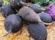 Black radish Stock Images