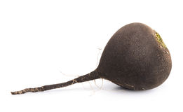 Black radish Royalty Free Stock Image