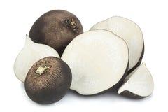 Black radish vegetable closeup. Black radish slice on white background Royalty Free Stock Image