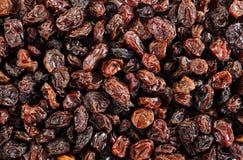 Black raisins Stock Photography
