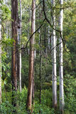Black Range Forest Stock Photo