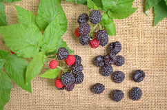 Black Raspberries Stock Photos