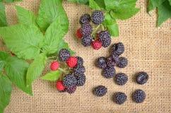 Black Raspberries Stock Photos