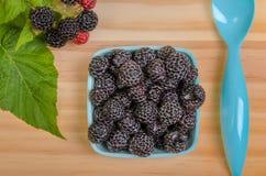 Black Raspberries Stock Images