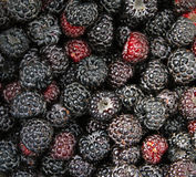 Black raspberries. Ripe black raspberry textured background Stock Photography