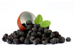 Black raspberries Cumberland isolated. On white background Royalty Free Stock Images