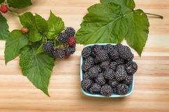 Black Raspberries Stock Photography